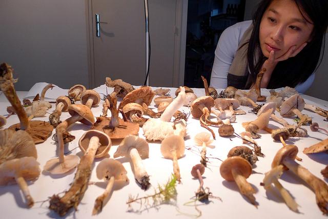 mushrooms03