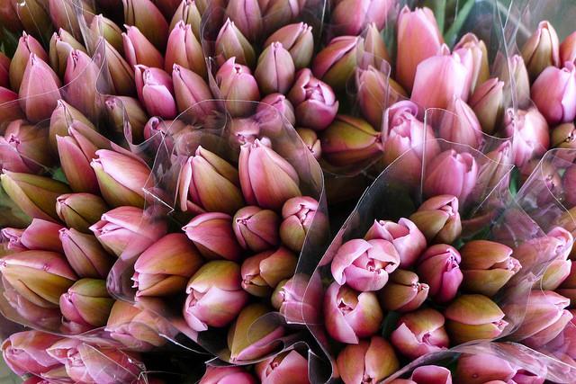 tulips28