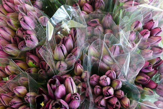 tulips29