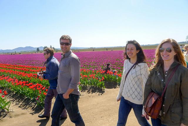 tulips37